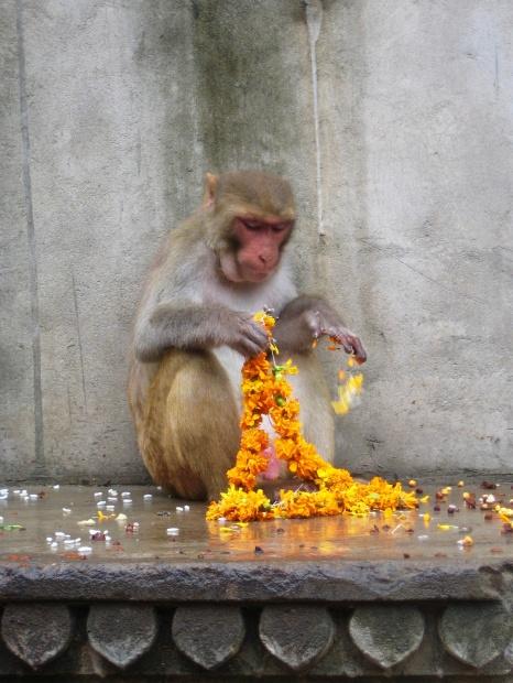 Monkey Temple, Jaipur