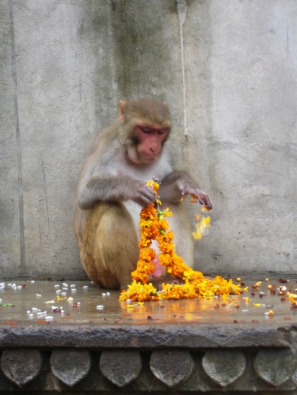 Monkey Temple, Jaipur