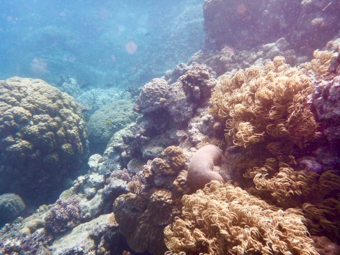 underwater photograph of the great barrier reef